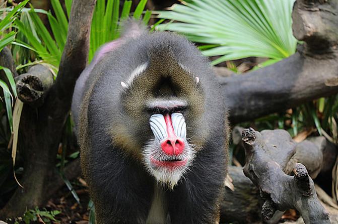 广州长隆动物园实拍:最美的鸟儿美不过最美的猴王