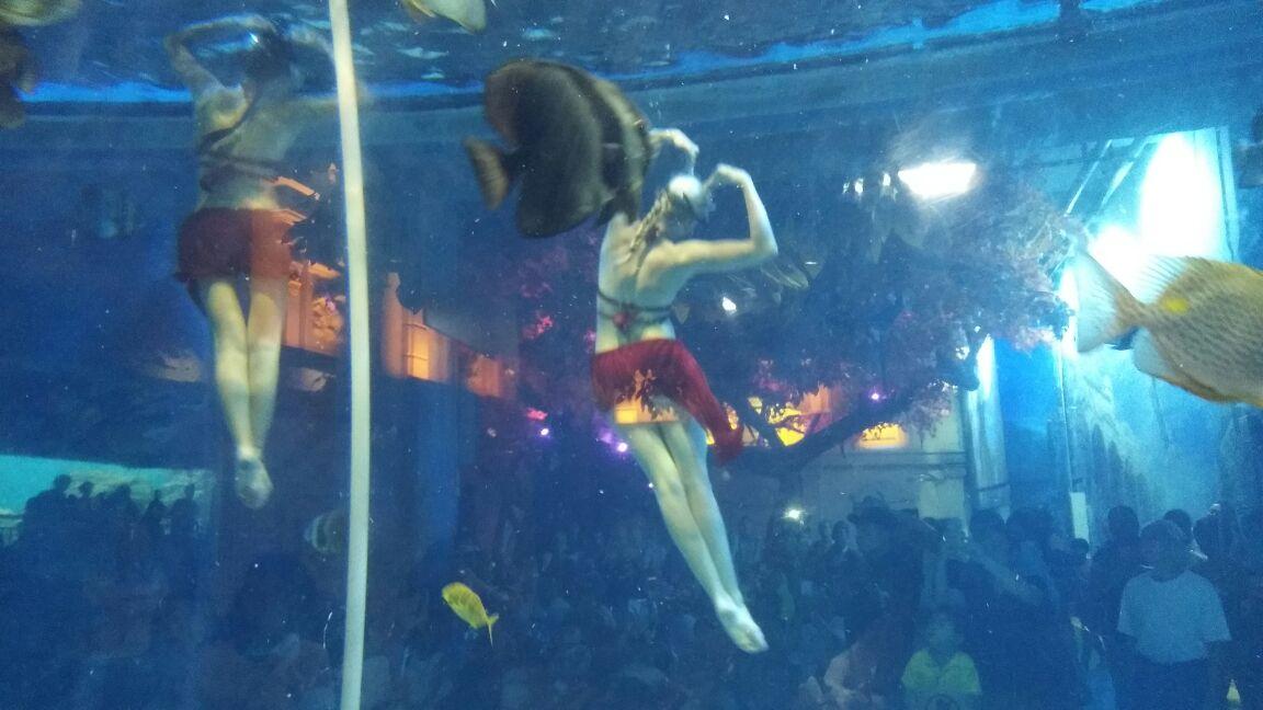 壁纸 动物 海底 海底世界 海洋馆 水族馆 鱼 鱼类 1152_648