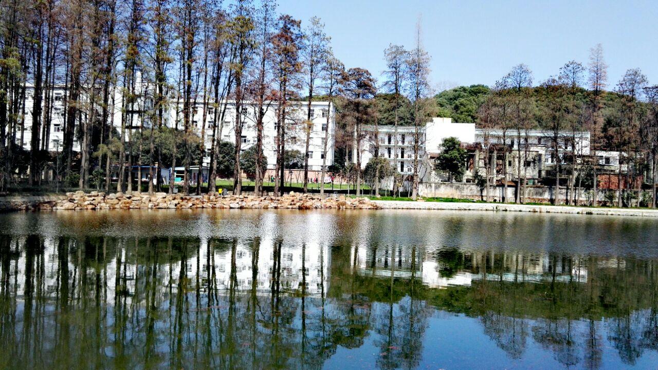 武汉大学v攻略攻略中国之旅乌龟青蛙图片
