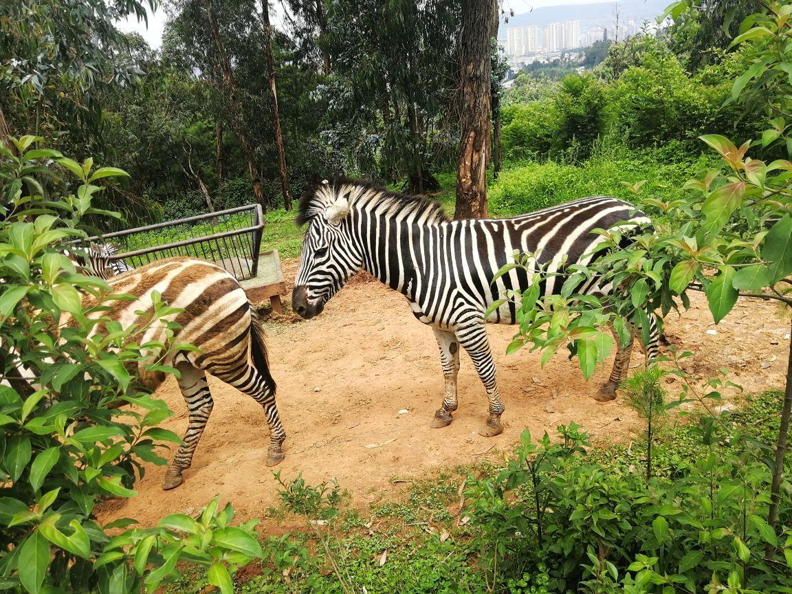 昆明云南野生动物园好玩吗,昆明云南野生动物园景点样