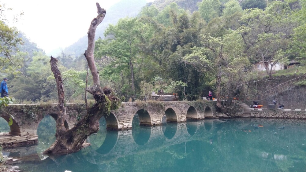 贵州森林野生动物园图片