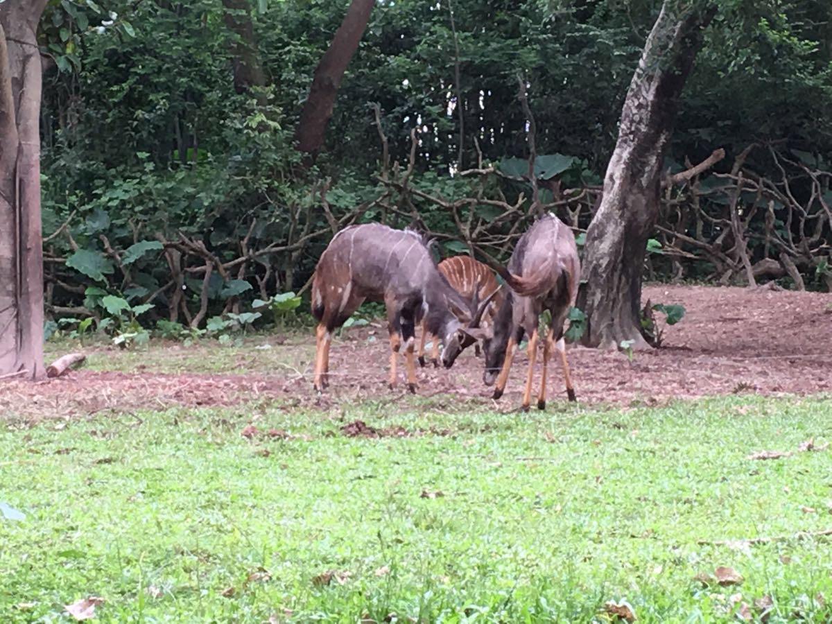 园内动物品种比较多,熊猫,考拉,四不像,白虎,长颈鹿… 2016-08-25有用