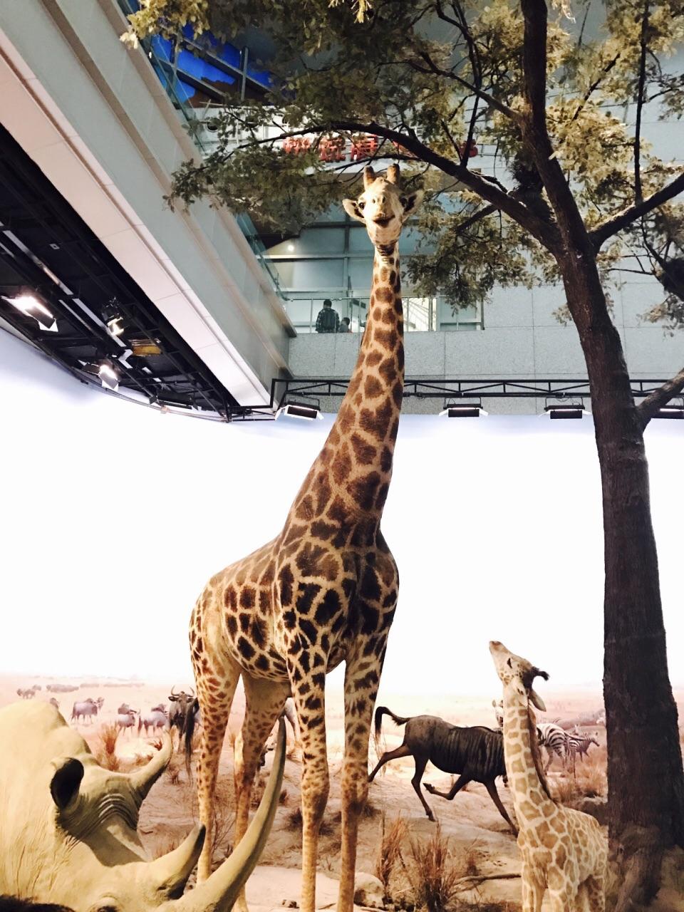 我们是先从2楼的动物世界逛起的,由各种动物标本构成,有点像自然