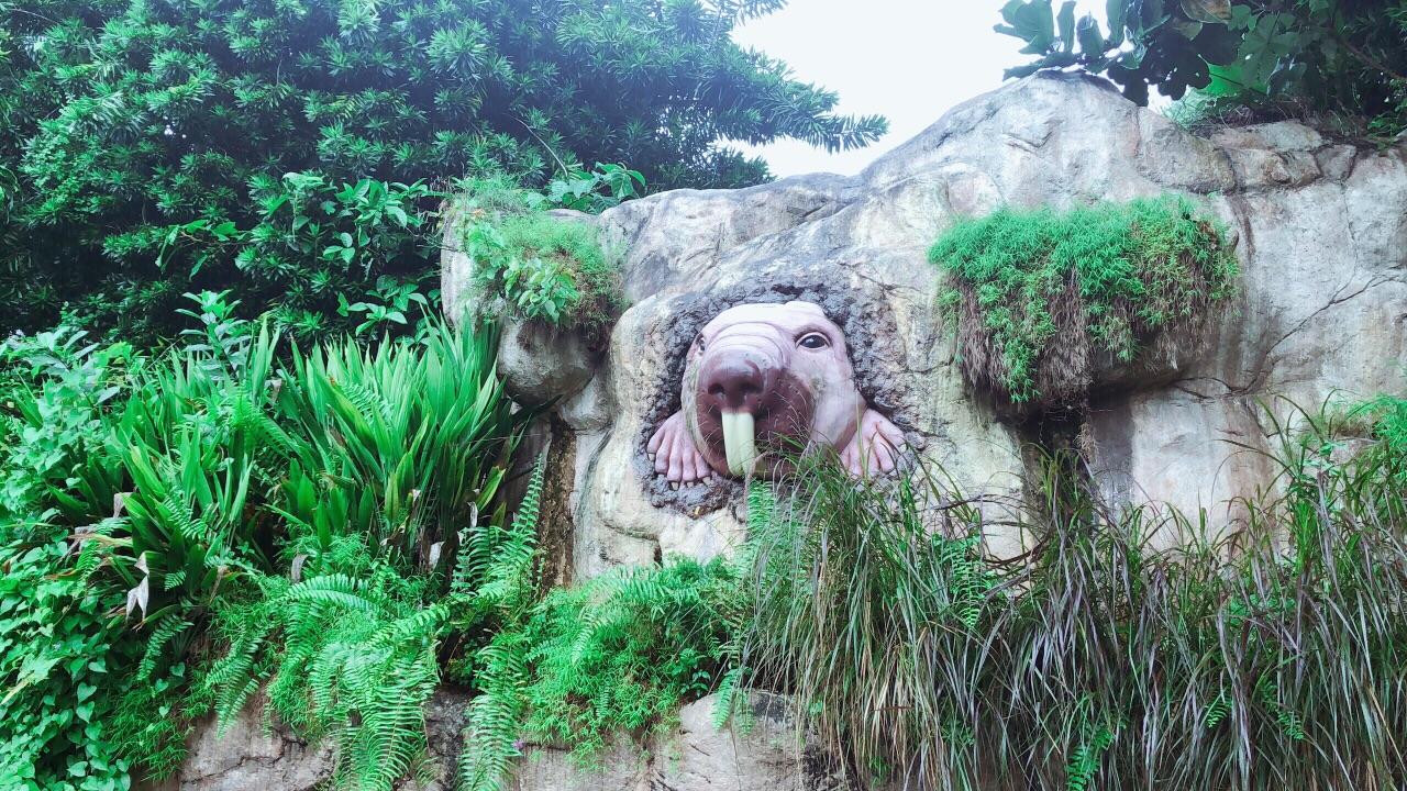因为酒店住在了乌节路,所以我们早晨八点半左右就从乌节路打车去了Singapore Zoo,车程20分钟左右,花费18新币。新加坡动物园是世界有名的动物园,属于半开放式,真的名不虚传,孔雀等各种鸟类就在路中央,看到游客还会飞下来,红毛大猩猩被饲养员领着回家,因为太淘气,从规定的区域爬树爬了出来,就在头顶看的很清楚,还有蛇类 蛙类 灵长类 大象 老虎 豹子 非洲野猪 非洲企鹅等等一些常见的以及不常见的动物都能看到,非常不错。取票也