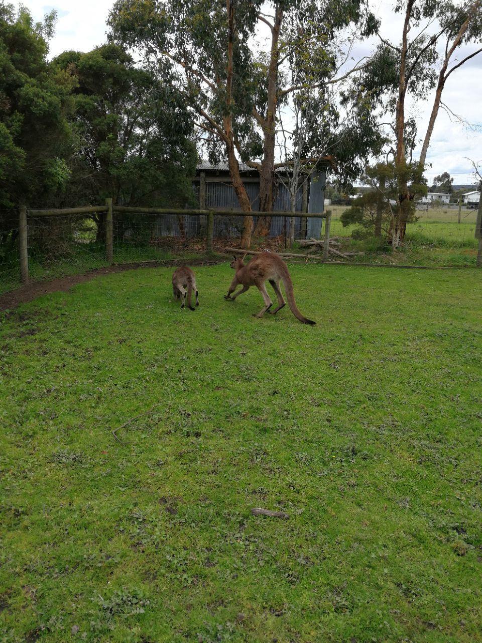 玛璐考拉和动物公园旅游景点攻略图