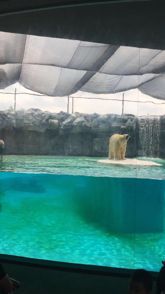 新加坡动物园在动物和环境保护