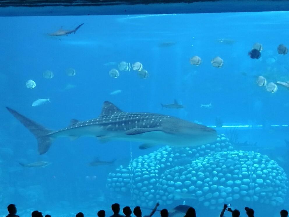 国内最大的海洋王国,动物表演很精彩,鲸鲨馆很壮观,小企鹅,北极熊都