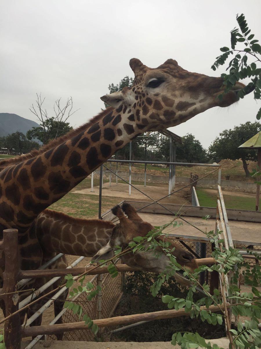 【携程攻略】陕西西安秦岭野生动物园好玩吗,陕西秦岭