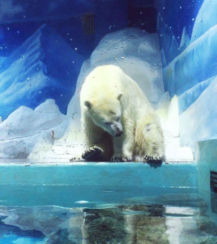 感觉不值这个票价,海洋动物种类不是很多,还有藏獒是什么意思,极地馆