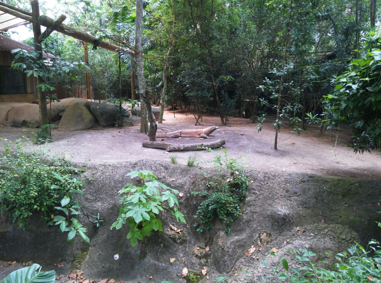 出游                                  新加坡动物园设计非常巧妙