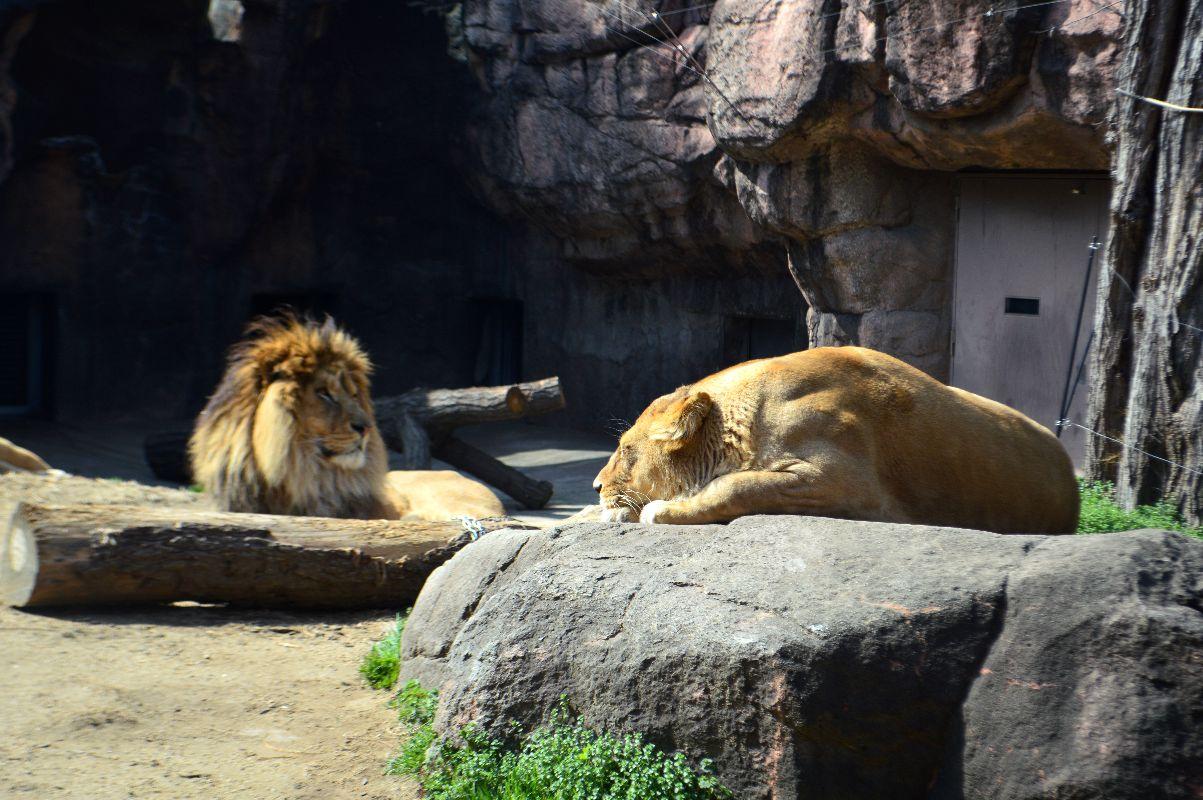 大阪天王寺动物园好玩吗,大阪天王寺动物园景点怎么样