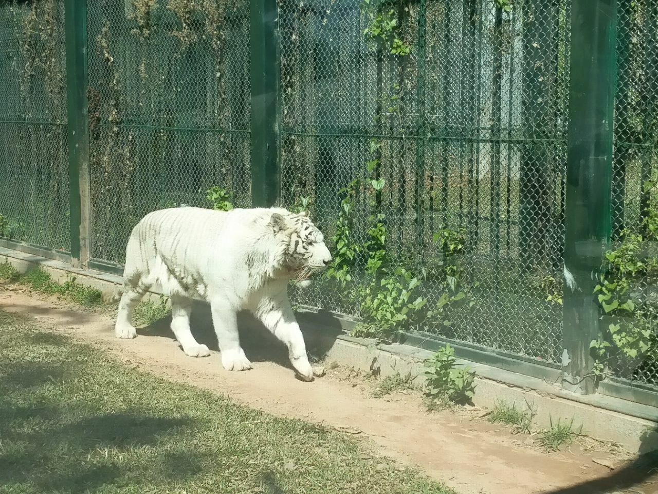 广州动物园(GuangZhou Zoo)位于广州市越秀区,东邻十九路军陵园,南接环市东路,西边云鹤路,北衔先烈中路。有南门和北门两个出入口,两门均设有停车场。于1958年建成开放,占地面积42公顷。2013年接待游客400万人次广州动物园共有选自全国和世界各地的哺乳类、爬虫类、鸟类和鱼类等动物 450余种(2013年),4500多头(只),其中不少属于世界珍禽异兽。属于国家一类重点保护动物有大熊猫、金丝猴、黑颈鹤等35种,属于国家二类重点保护动物的有小熊猫、白枕鹤等32种。