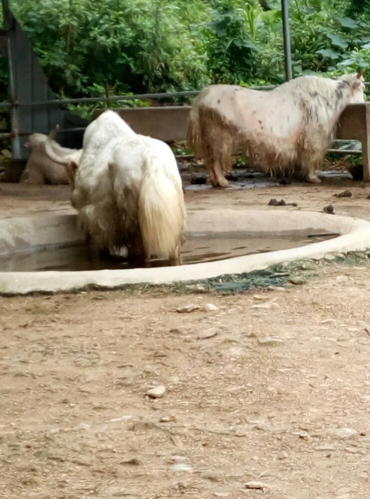 【携程攻略】浙江台州温岭温岭动物园好玩吗