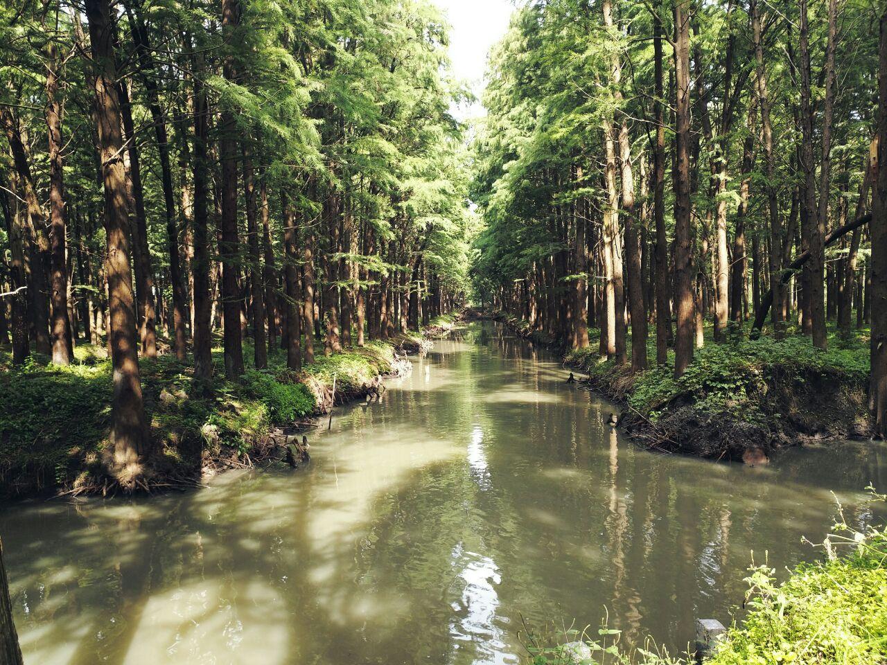 【携程攻略】兴化李中水上森林公园好玩吗,兴化李中水图片