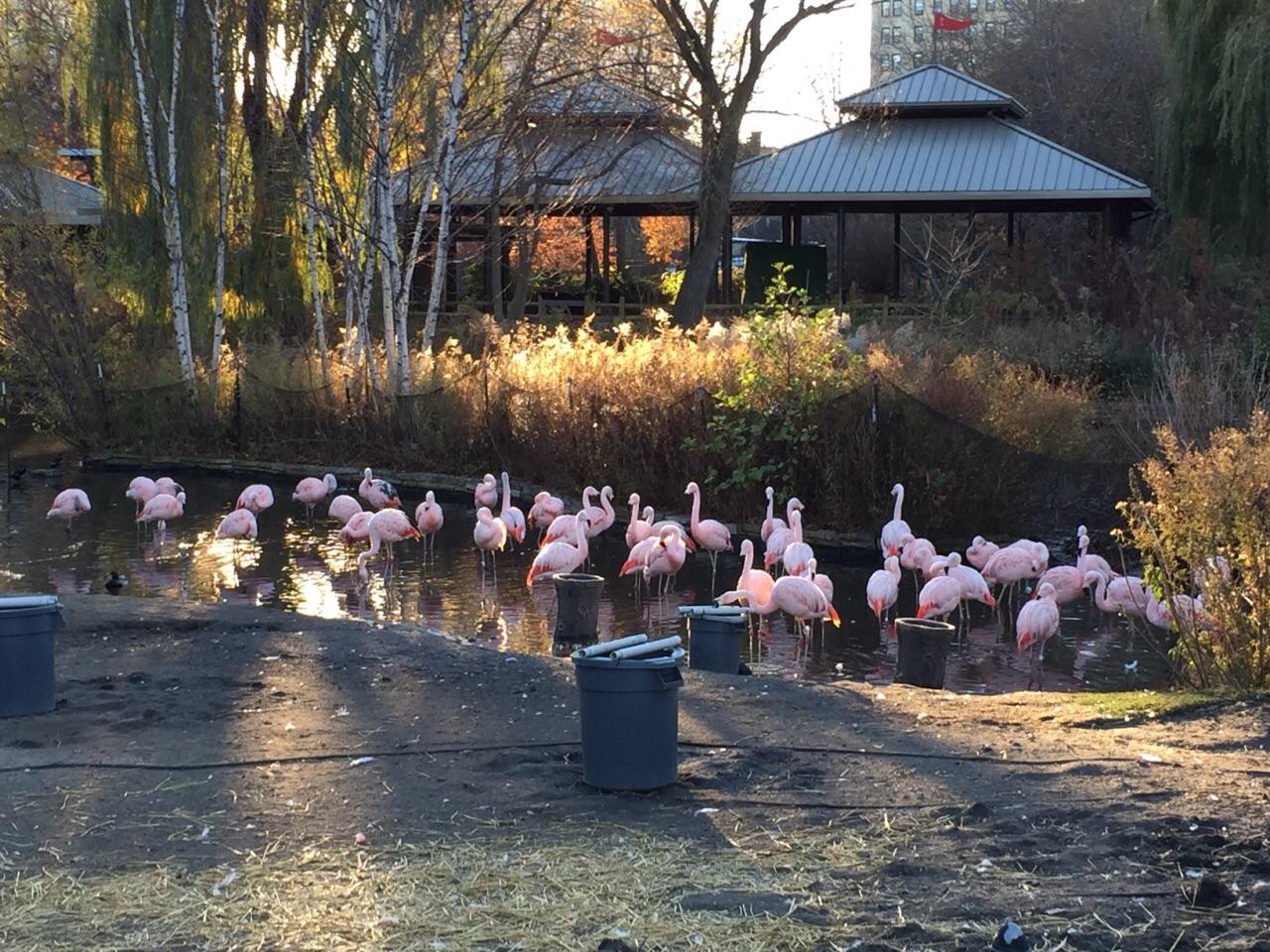 林肯公园动物园旅游景点攻略图