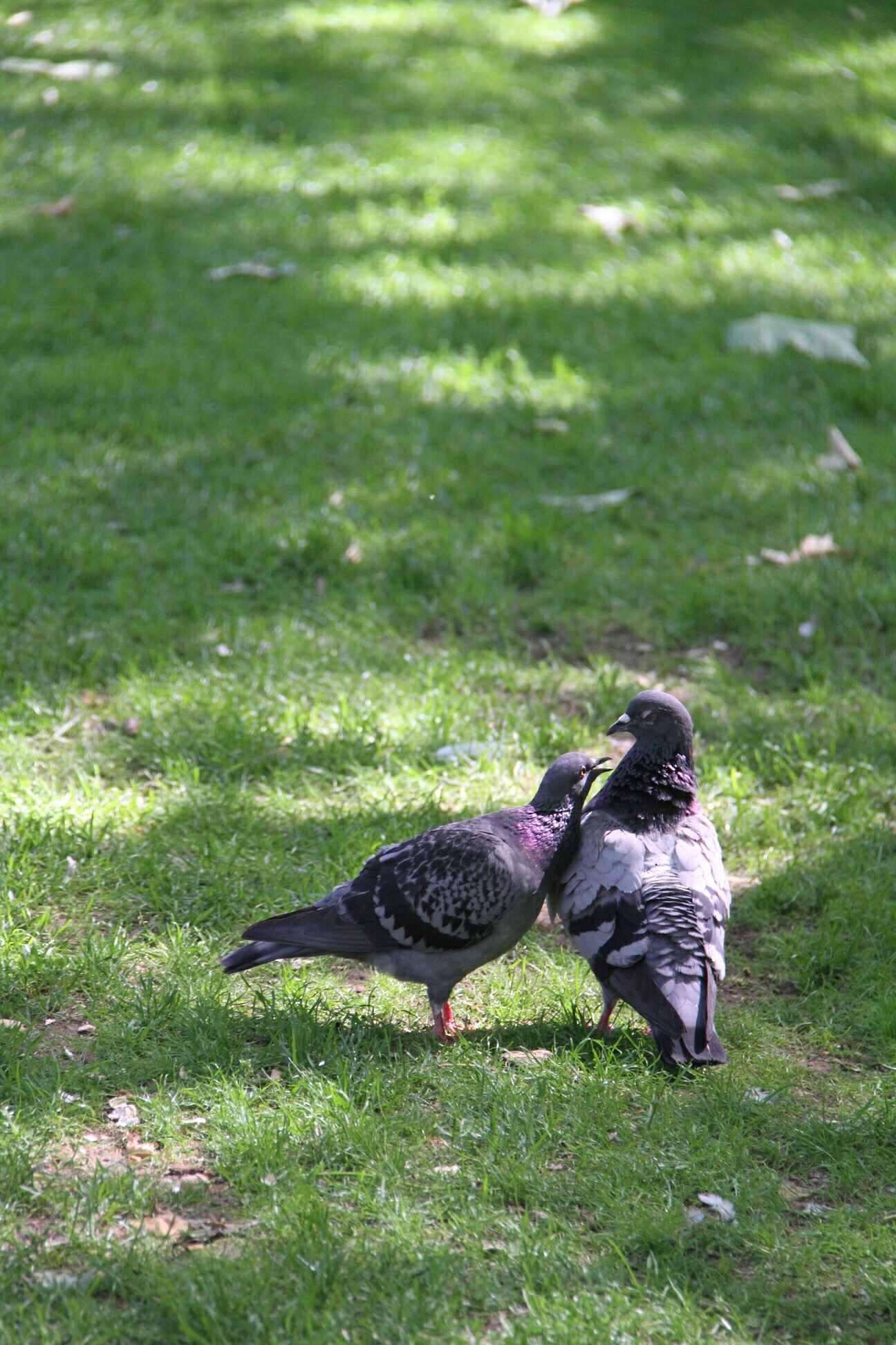 海德公园这块伦敦人的瑰宝在春夏秋冬各有不同景像:春天骑单车游园赏花、躺在草地上野餐、在Serpentine Lake喂天鹅鸭子;海德公园是伦敦最知名的公园。 海德公园是英国最大的皇家公园。位于伦敦市中心的威斯敏斯特教堂地区,占地360多英亩,原属威斯敏斯特教堂产业。十八世纪前这里是英王的狩鹿场。16世纪,英王亨利八世将之用作王室的公园。查理一世执政期间,海德公园曾向公众开放。夏天举办British Summer Time音乐节摇滚一番,在园中练习滑板骑马跑步;秋天看