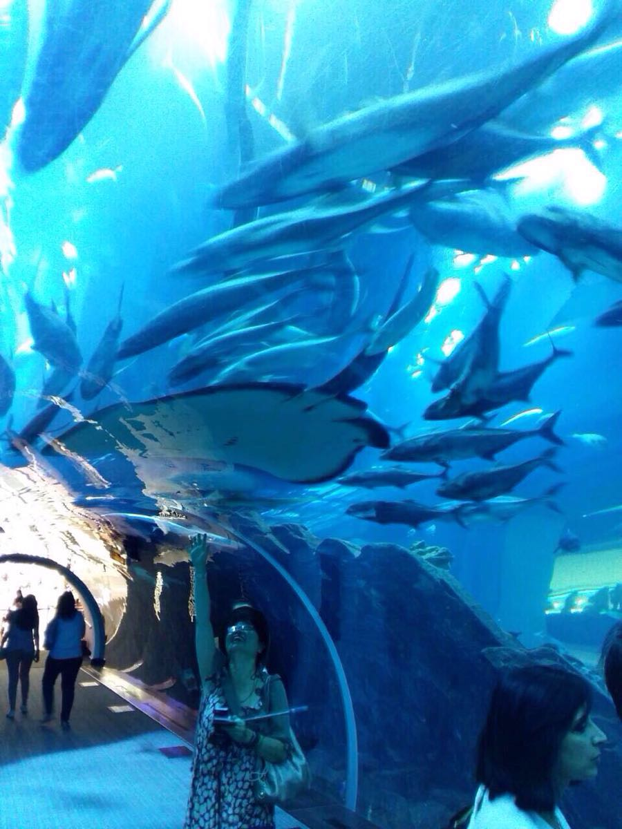迪拜水下动物园