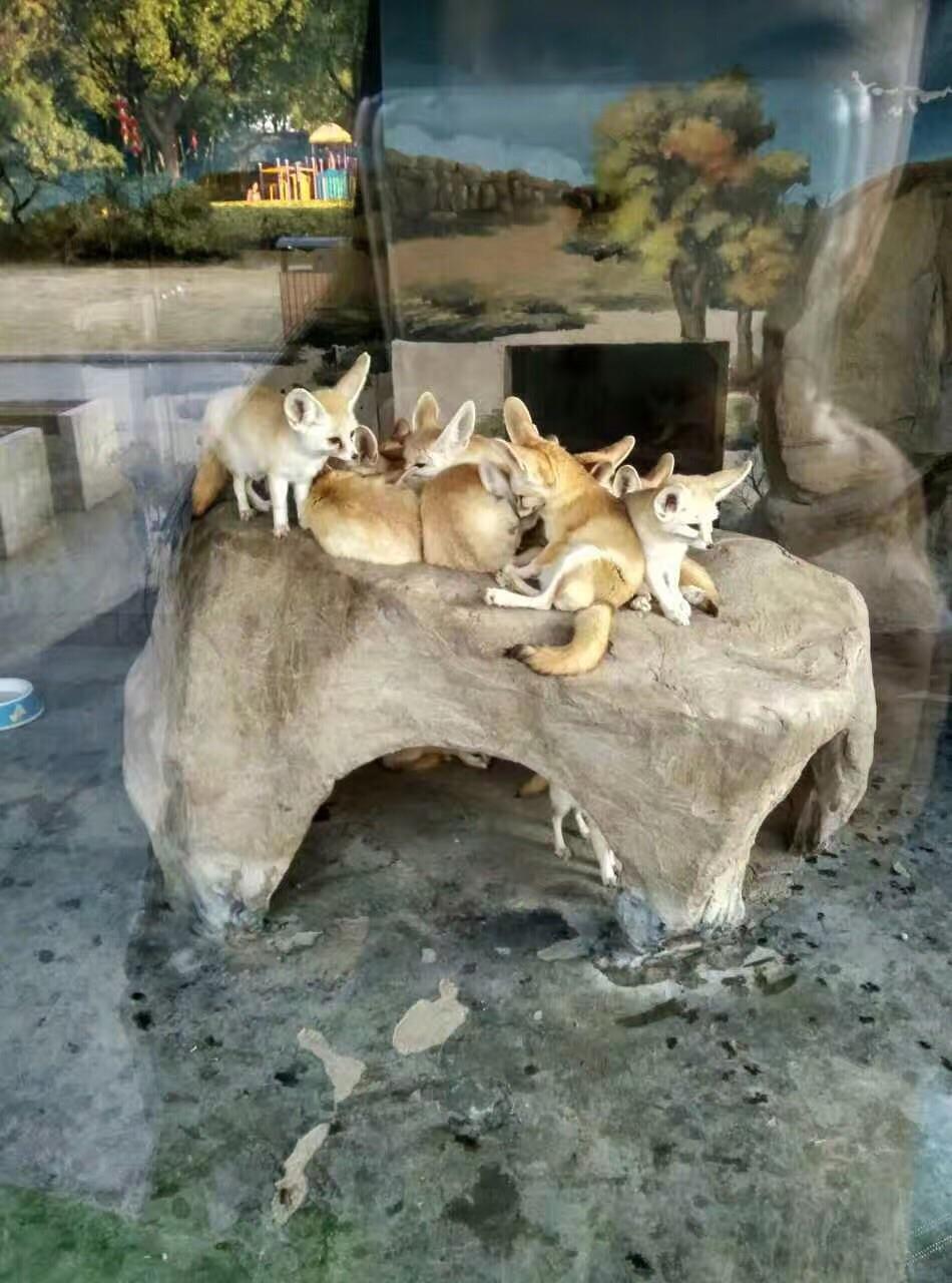 上海野生动物园比长隆优势是有各种亲子休闲自行车,可以一家人开心