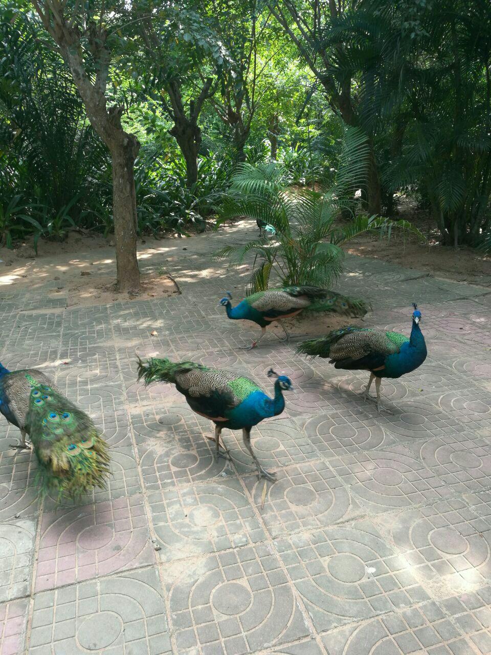 海南热带飞禽世界旅游景点攻略图