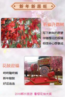 桂阳赏樱!美食第三届樱花节春节盛大开幕!贵阳的花样二七小吃街图片