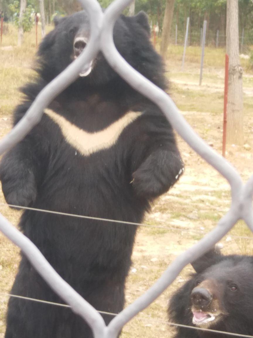 今天第一次去香市动物园,看到好多动物还有表演,带小孩
