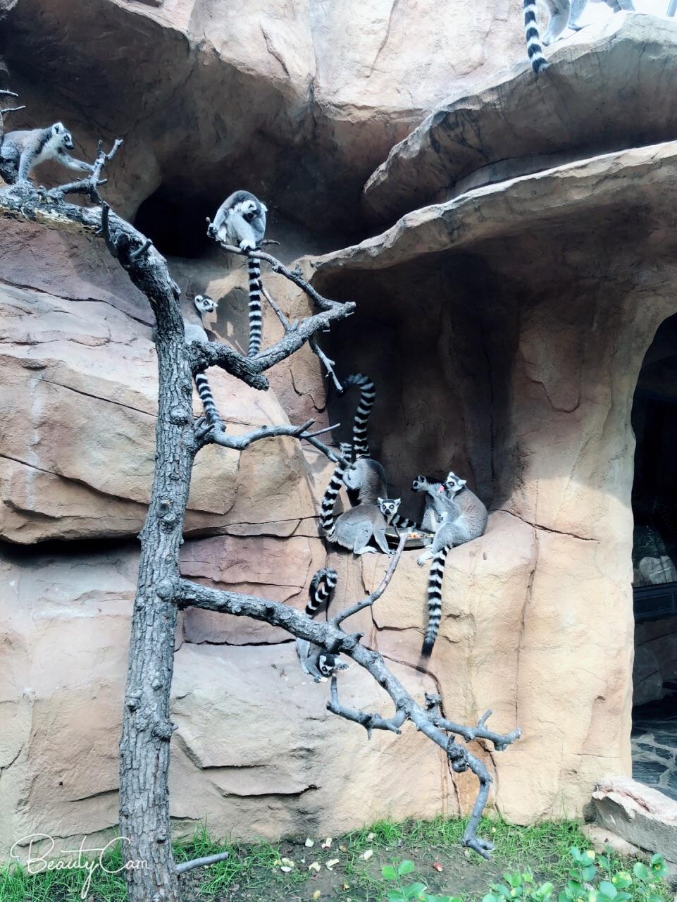 北京野生动物园