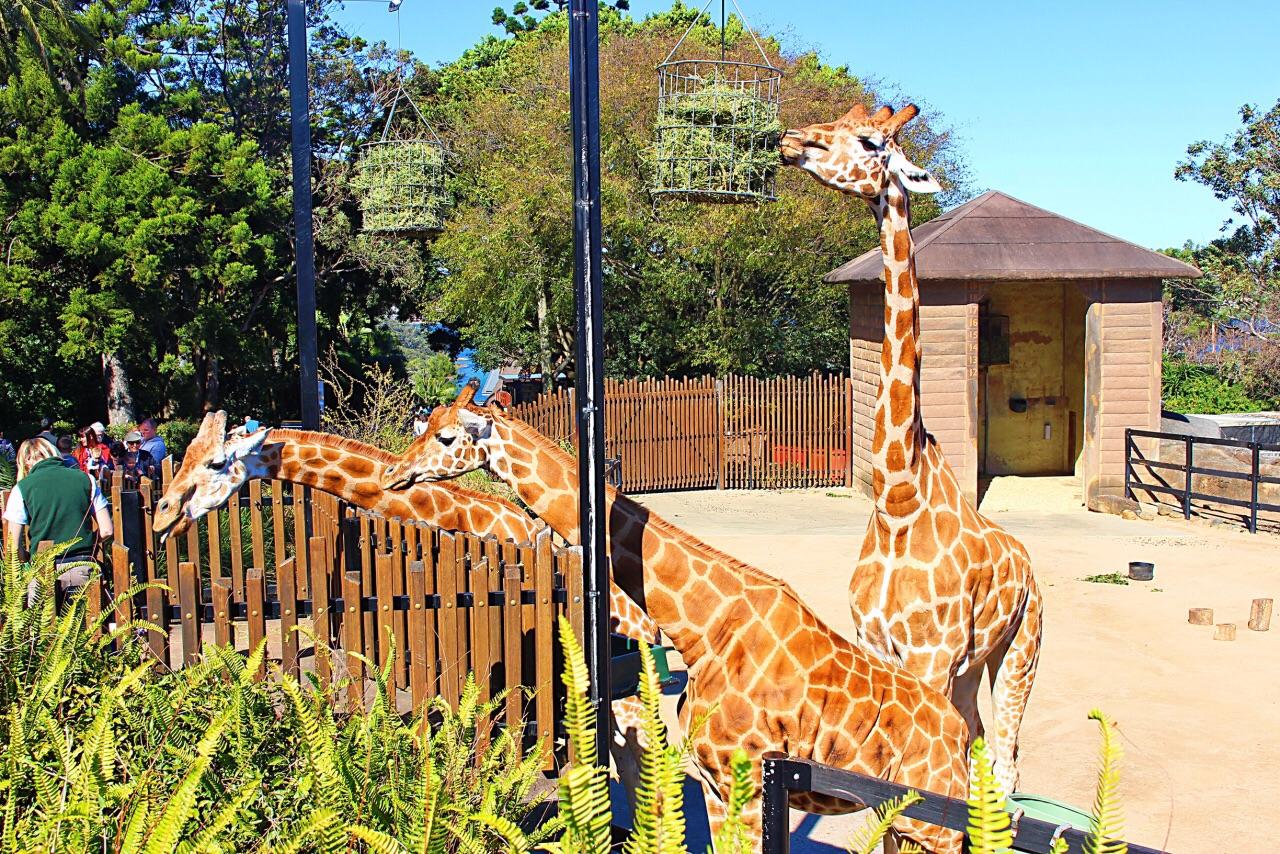 塔龙加动物园