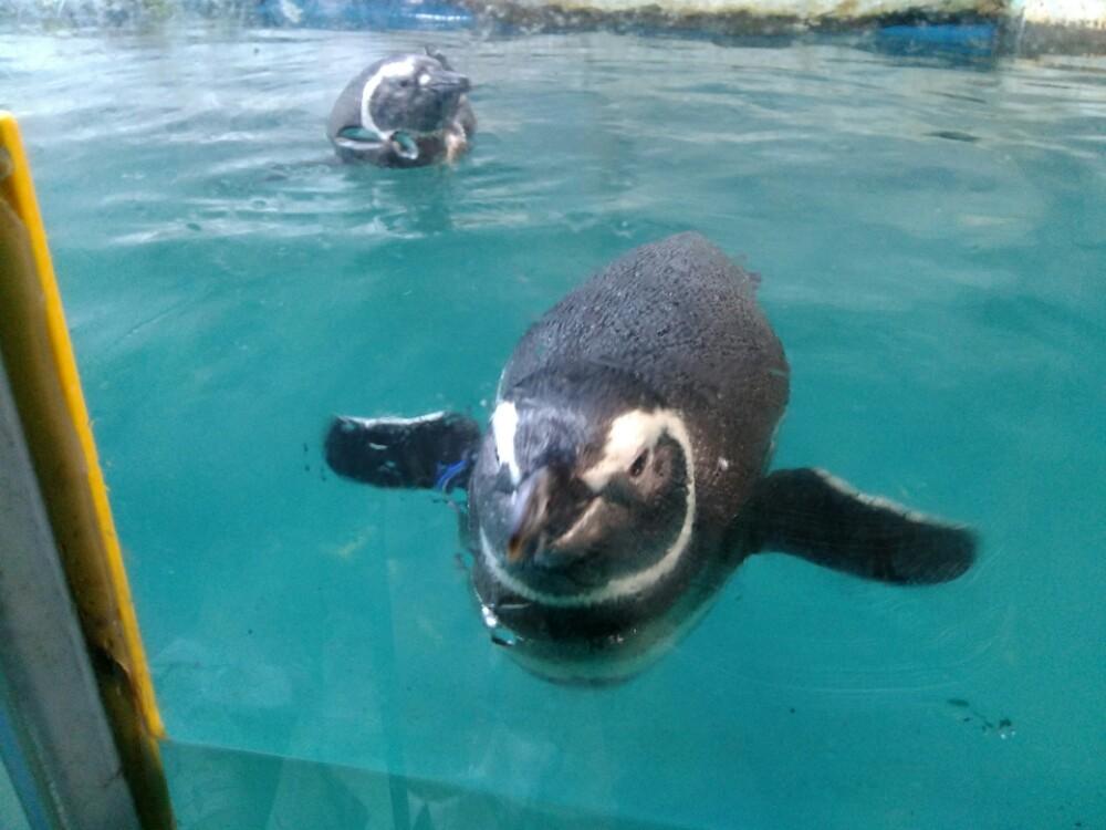 壁纸 动物 海洋动物 桌面 1000_750