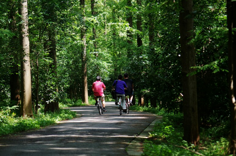 除了游乐设施外,森林公园还提供:滑草,森林浴,森林越野车,匹特博运动