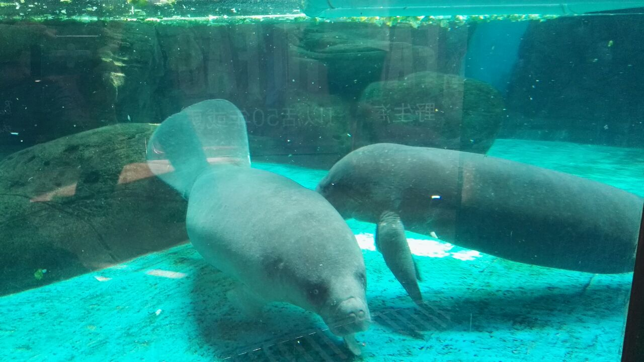 壁纸 动物 海底 海底世界 海洋馆 水族馆 鱼 鱼类 1280_719