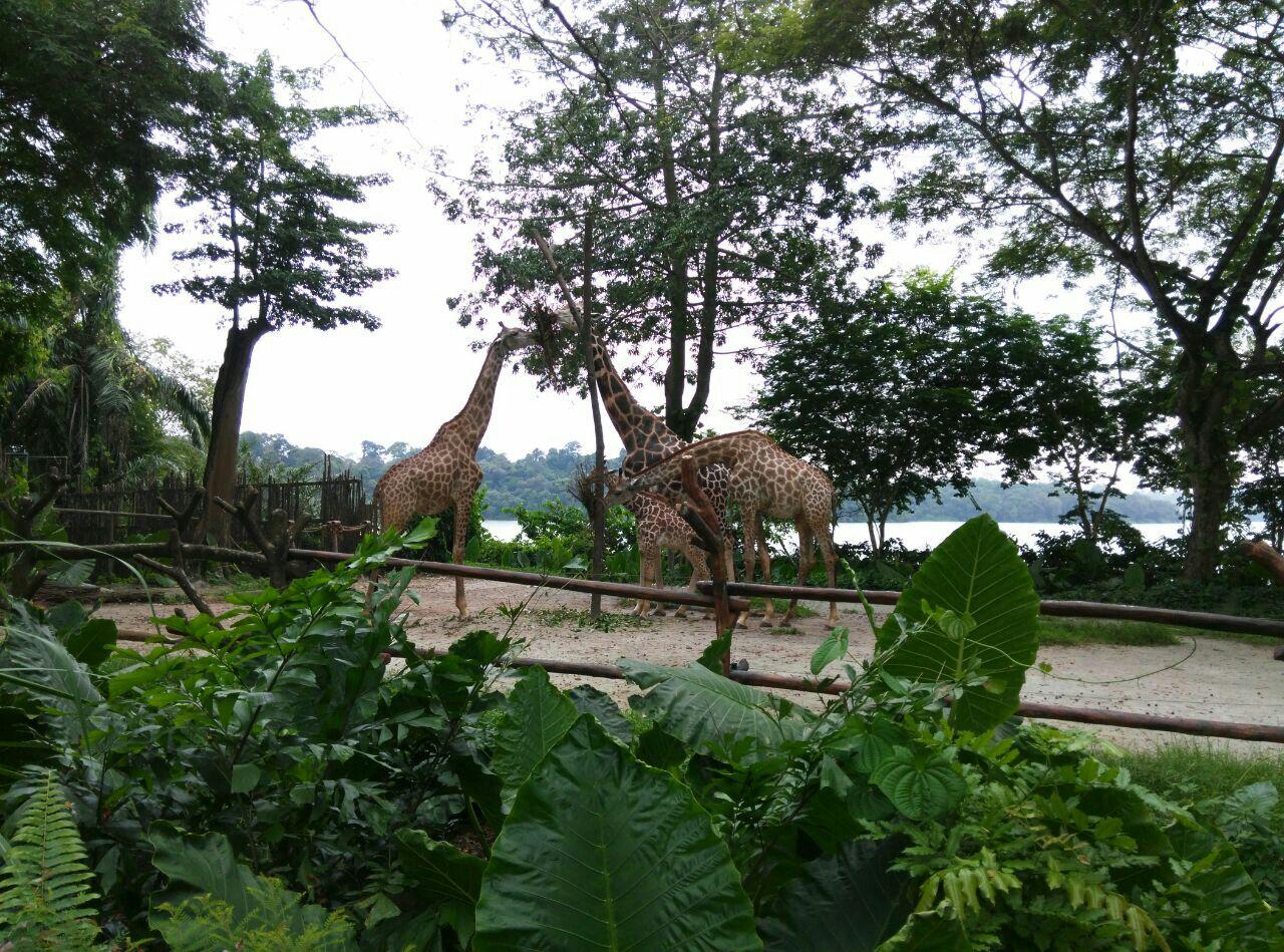 【携程攻略】巴厘岛巴厘野生动物园景点,这里我觉得是