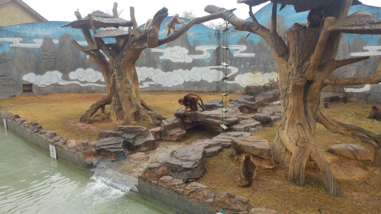 杭州野生动物世界位于杭州近郊,和普通动物园比起来,这里的动物们要自在得多,游人也可以更近距离地观看它们。此外还有不少有趣的免费表演和游乐项目,很适合带小朋友来玩。 游园概览 景区分为步行区和行车区两部分,可以从正门购票步行入园,也可从右边的自驾游入口付车辆通行费自驾入园(220元/辆)。大部分动物和动物表演都在靠近大门的步行区,但狮子、老虎一类的动物必须去到靠里的行车区才能看到。若是自驾,可先行游览车行区,将车停在景区内的停车场,而后前往步行区继续游玩。 步行区 从大门步行入园,首先到达的是步行区,沿着类