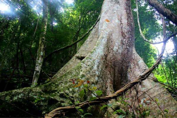 西双版纳热带植物园内有棕榈园,榕树园,龙血树园,苏铁园,民族文化植物