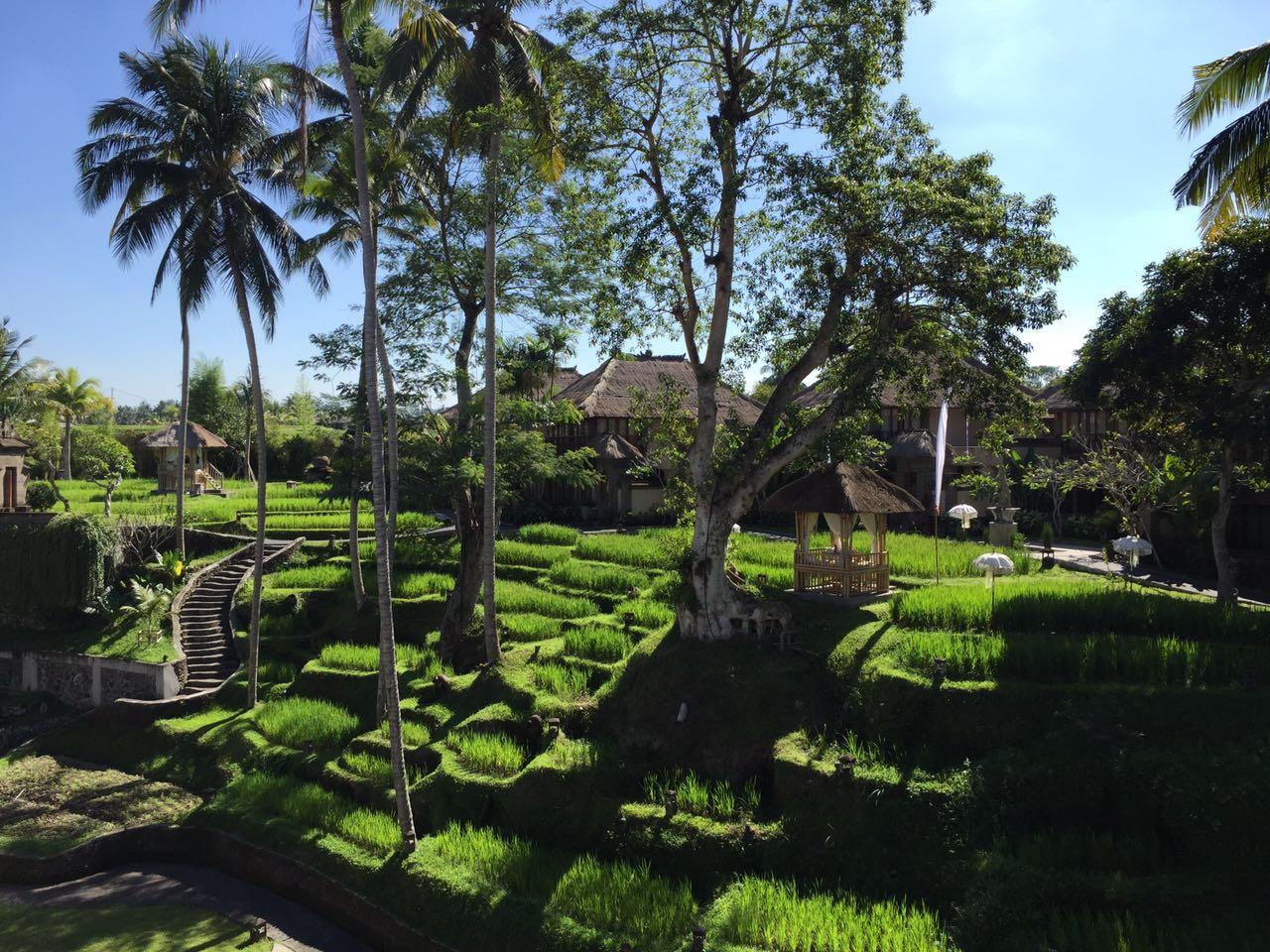 这家酒店的特点就是梯田和瑜伽房,酒店虽然不大,但景观还不错,小巧图片