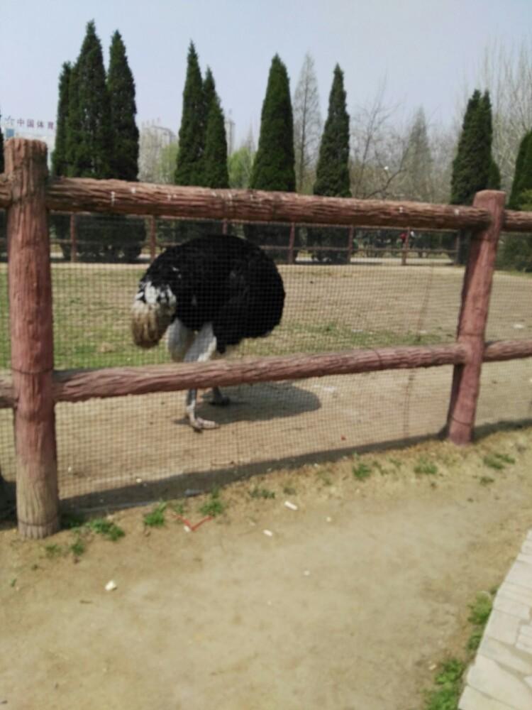 不锴,有好多动物,是孩子的乐园 2016-07-28有用 ( 0)