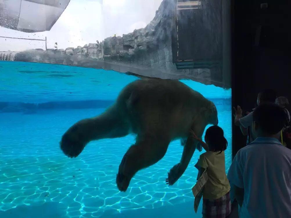 2016-8 出游                                  超级大的动物