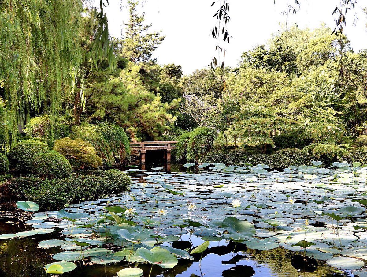 秋霞圃是中國江南著名的古典園林,位于上海嘉定區嘉定鎮東大街,同時