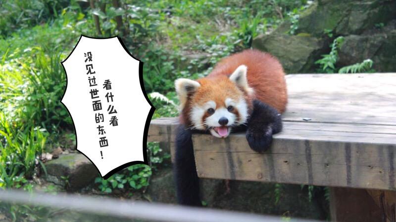 杭州动物园位于虎跑路40号,是中国的七大动物园之一。是一座集野生动物保护、科研、科普、教育和游览于一体的山林式动物园。景区里有熊猫馆、大象馆、金鱼馆、长颈鹿馆、珍贵猴房、鸣禽馆、两栖爬虫馆等20多个场馆。饲养着大熊猫、金丝猴、白颊长臂猿、黑猩猩、东北虎、亚洲象、蟒蛇、绿孔雀、丹顶鹤和长颈鹿等各类珍稀野生动物。在景区里有很多的指路牌,能够让人知道去哪个方向有什么动物,还是很到位的,很值得一去的!
