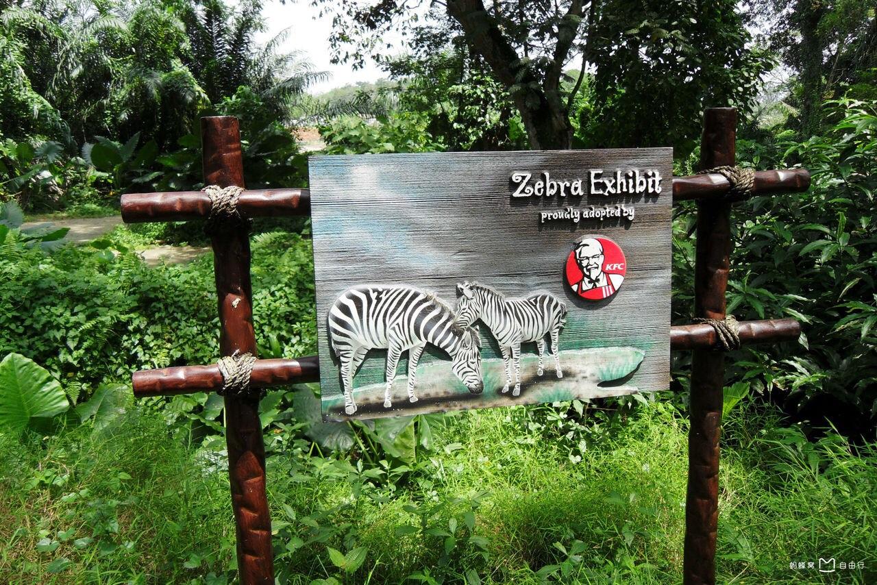动物园里面一片生机勃勃的绿色植物,这些动物生长在这么好的环境里面