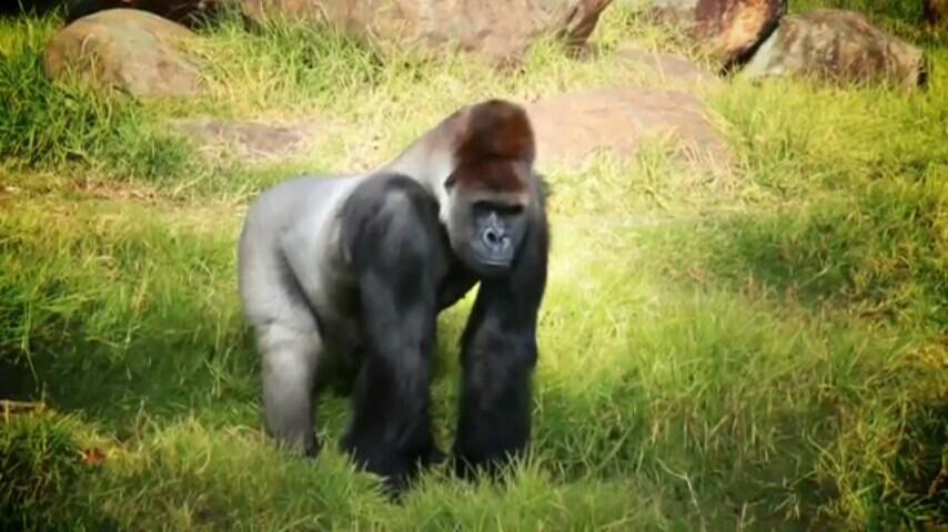 斯堡约翰内斯堡动物园好玩