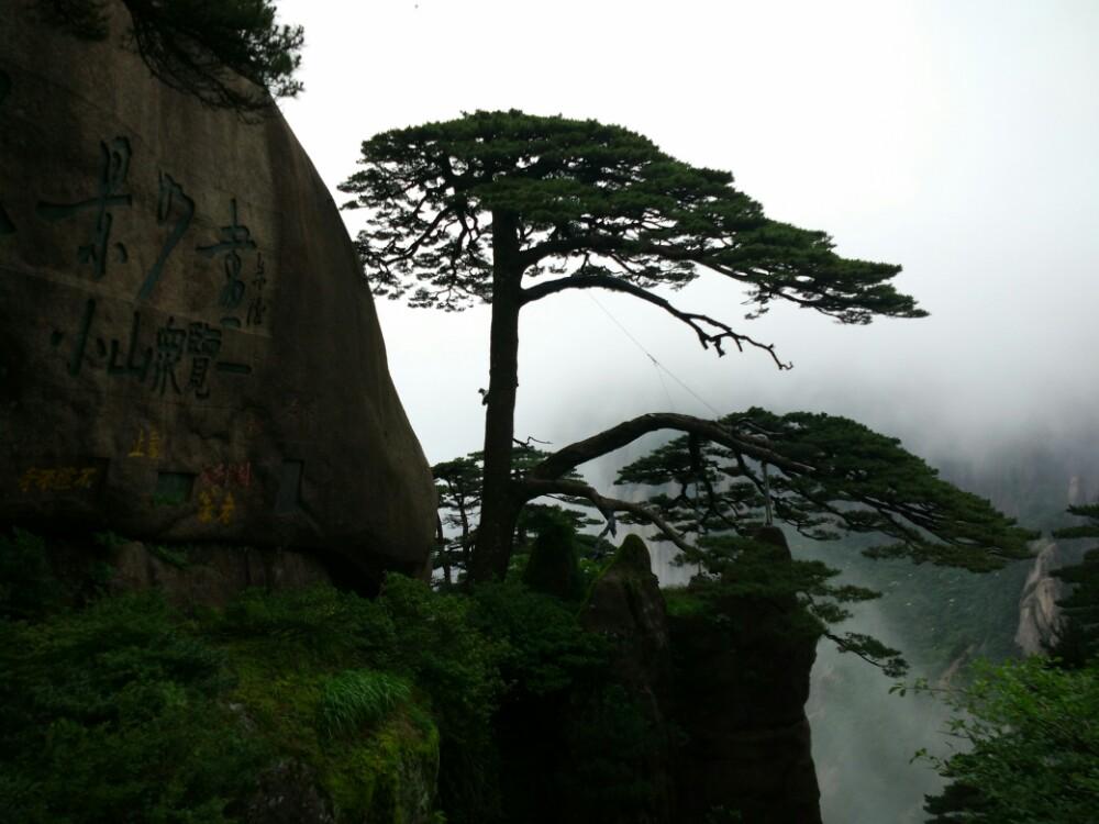 最后一天下山时去的迎客松,从后山天不亮就出来,爬了很久,本来想好好休整一下去天都峰,但是迎客松的人多到无法形容,拍照要排长队,天气也不好。相对头几天的人流稀少,风景秀丽,一下子不太能适应。树嘛,也不是非常的特别。应该说黄山棵棵都是迎客松,漂亮的松树实在太多,游玩到最后反而突显不出来了。