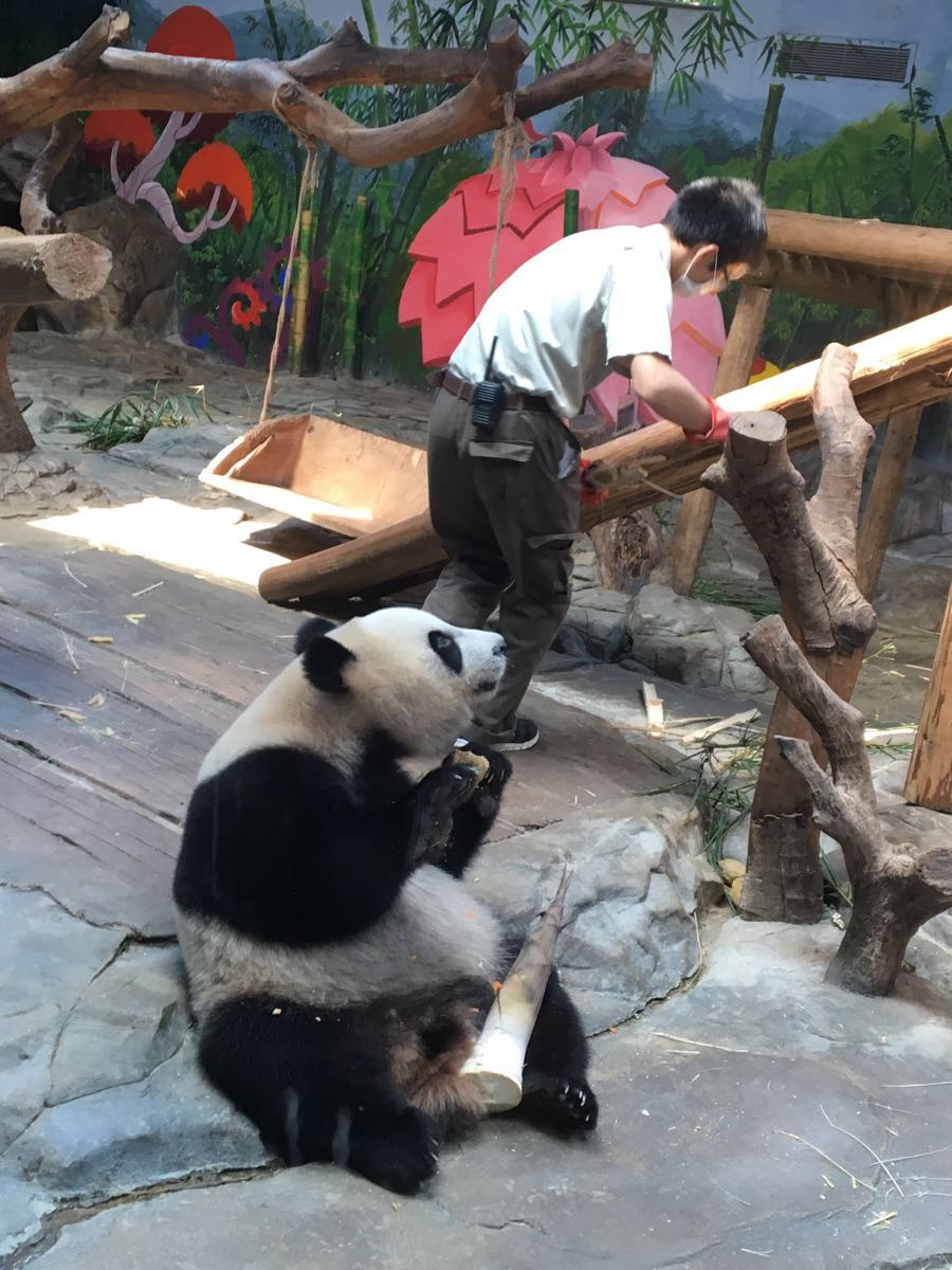 【携程攻略】广东广州长隆野生动物世界好玩吗,广东样