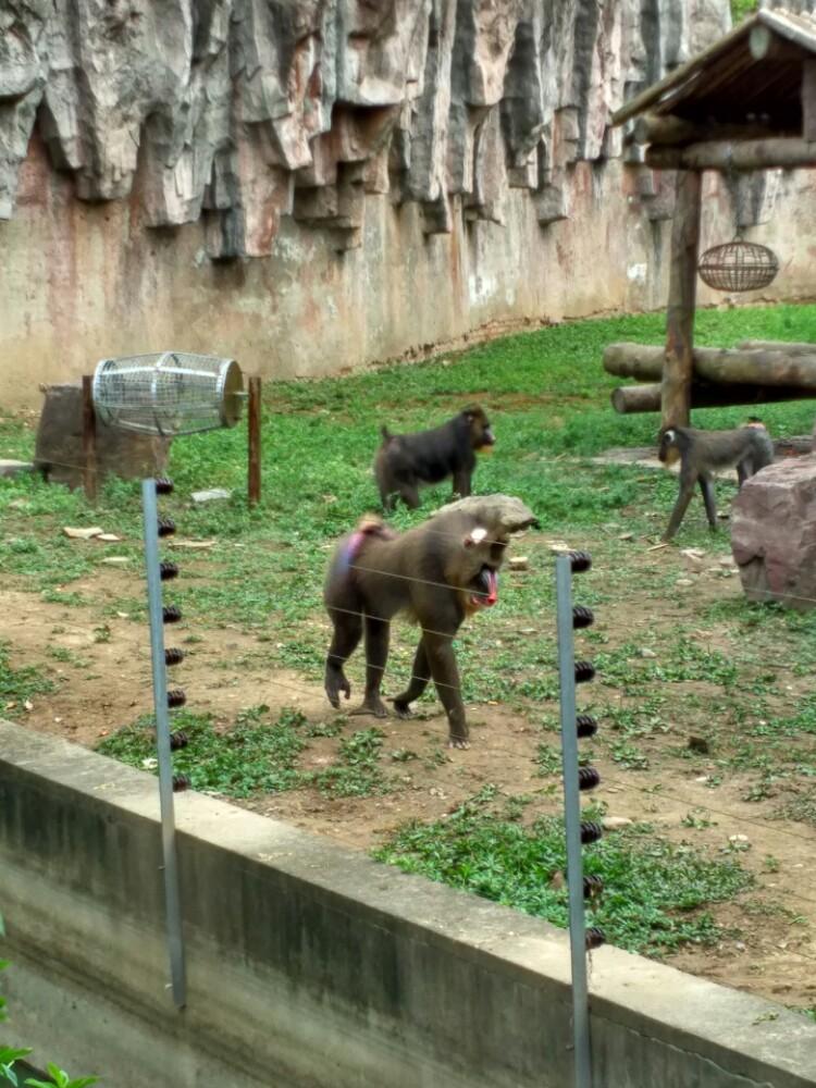 【携程攻略】上海上海野生动物园景点,携程抢的29元的