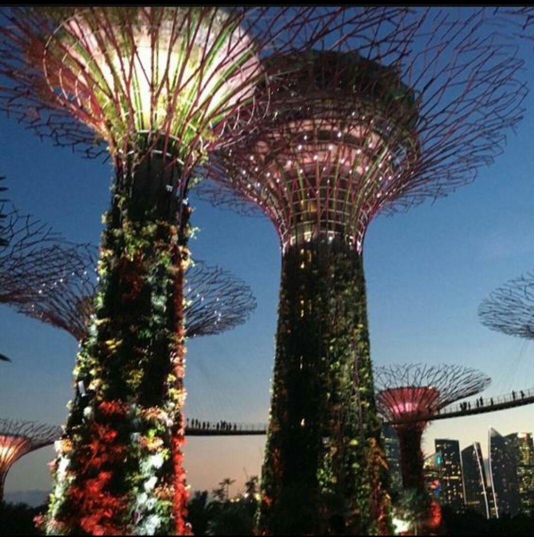 新加坡的新地标,曾赢得了2012年世界最佳建筑奖(WinnerofWorldBuildingoftheYear2012),由温室(花穹和云雾林)、18棵超级树、文化遗产花园、植物世界、蜻蜓湖和翠鸟湖等组成。地铁黄线、蓝线,海湾舫站均可到达,这个花园是不需要门票的,但是你要是进到两个馆里面还有空中走廊是要收费的,两个馆(玻璃冷室)、云雾林和花穹,冷室还原了热带山地地区凉爽潮湿的气候和地中海及半干旱、亚热带地区凉爽干燥的气候。除了永久性展示一些有趣的植物和树种之外,花穹还会根据季节变化更替部分展示的花卉