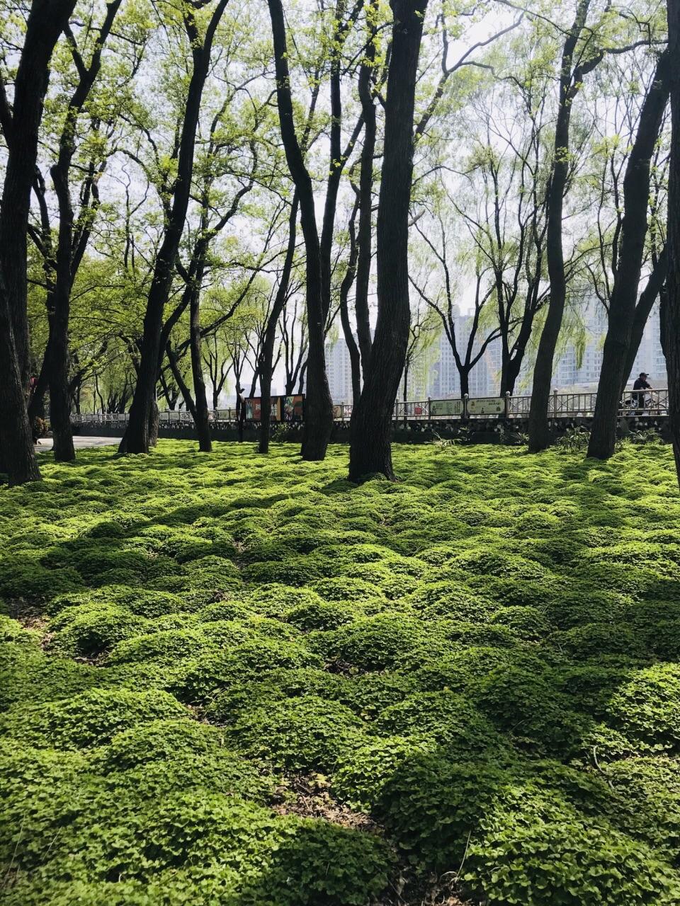 【携程攻略】信阳浉河公园好玩吗,信阳浉河公园景点样