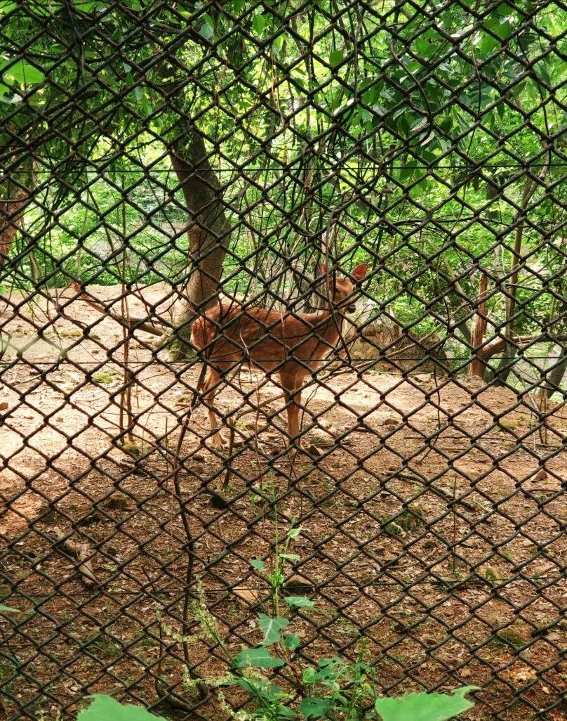 2018红山森林动物园_旅游攻略_门票_地址_游记点评