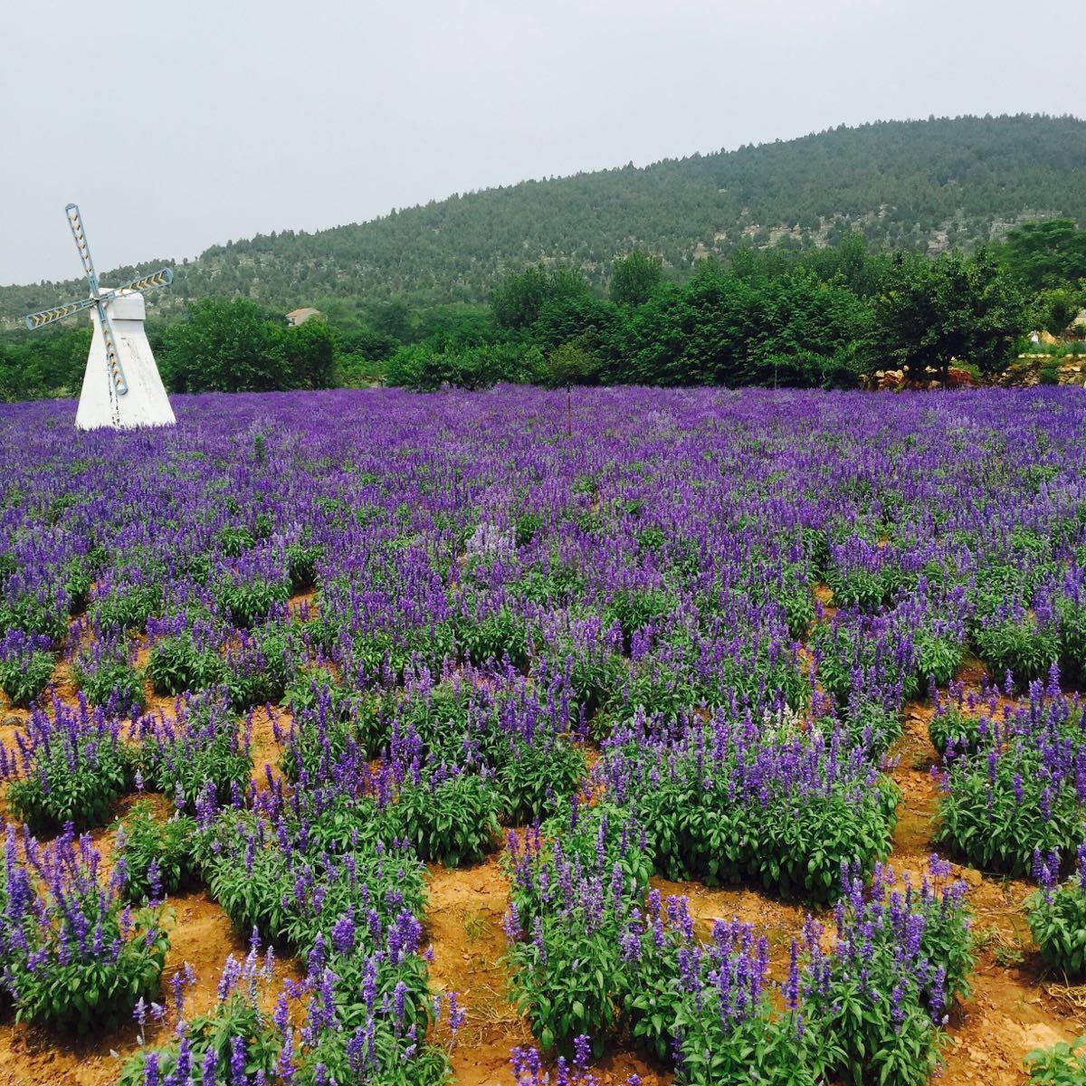 紫海蓝山文化创意园