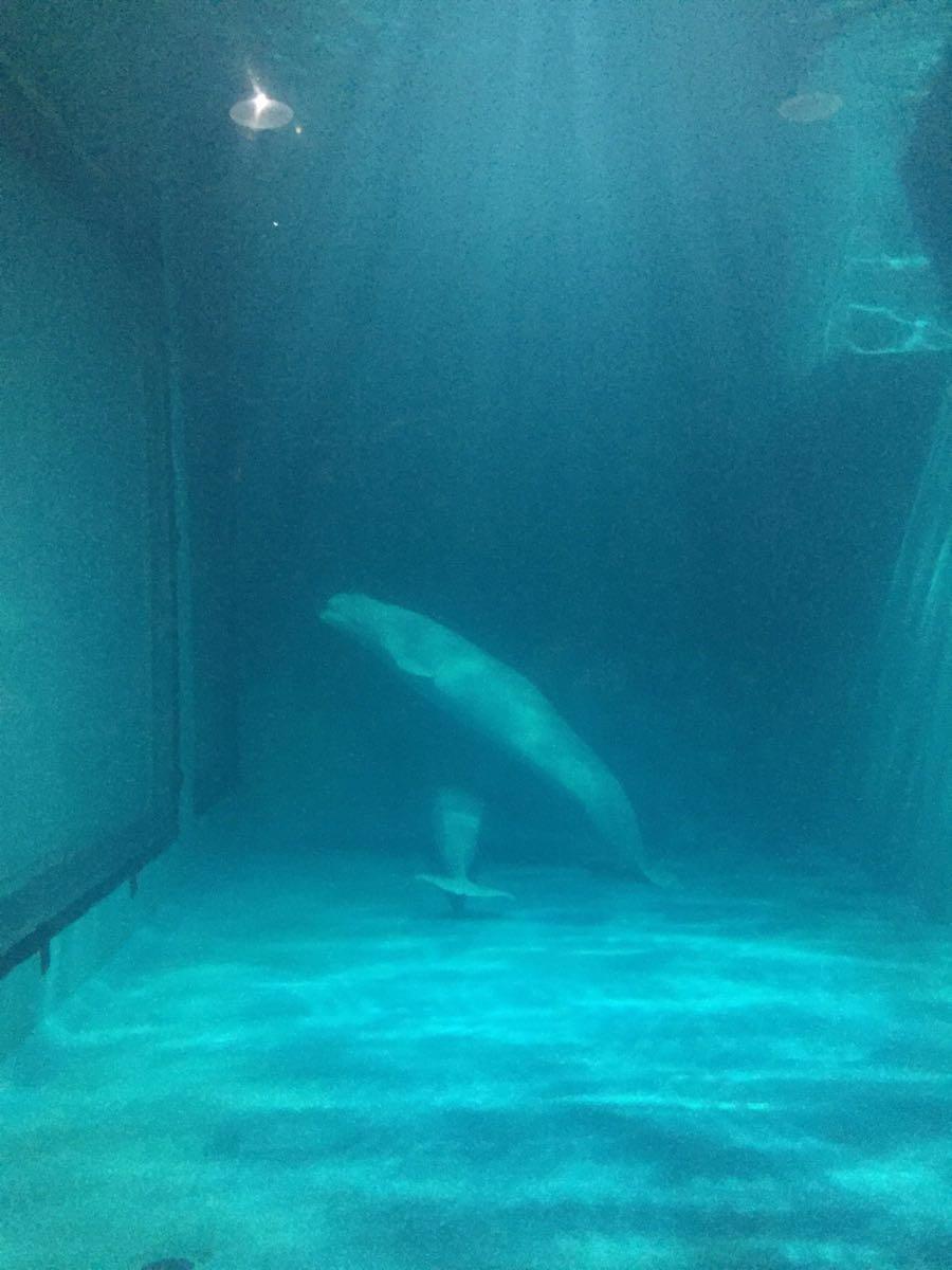 海洋馆同其它同类场馆相比,基本雷同。极地世界里略有几个看点聪明的海豹的确出人意料的精彩、整个演出趣味很浓、很生动,赢得了众多欢笑、掌声。值得赞一记~!白海豚很通人性、相当可爱~!  海洋世界的小企鹅不是一般的多,超级机灵、可爱,值得一看、欣赏....