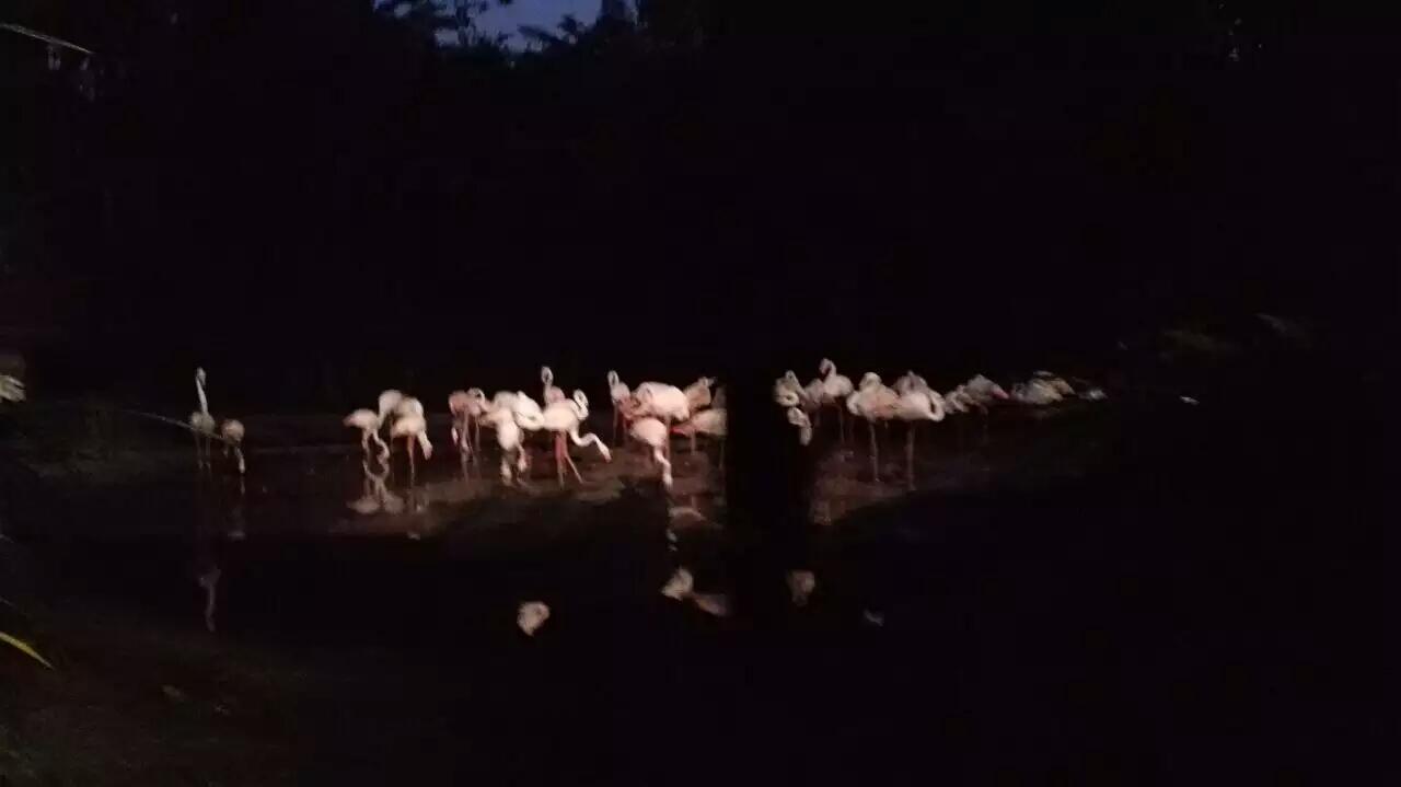 新加坡夜间野生动物园好玩吗,新加坡夜间野生动物园样
