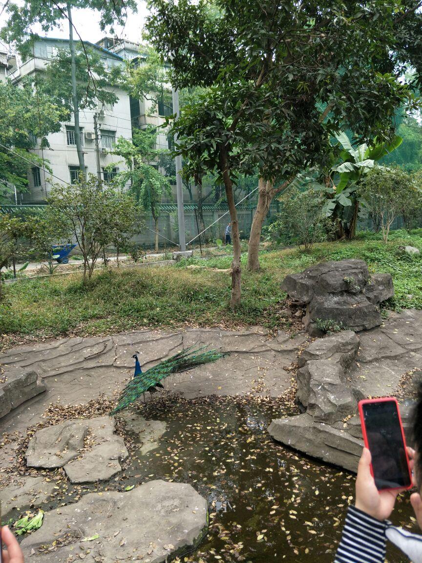 设施老化,动物太少,和广州这个国际大都市不匹配,连成都重庆的动物园
